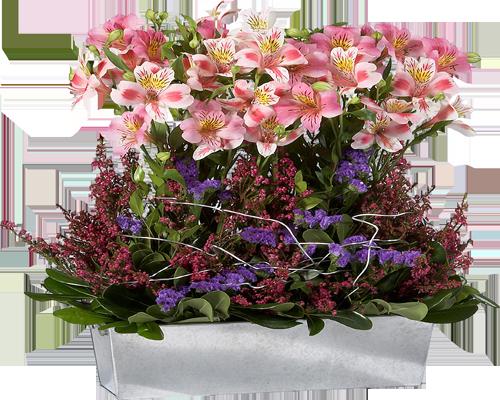 Цветы в картинках фото комнатных