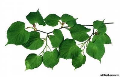 Листья,трава ,деревья в PNG. Обсуждение на LiveInternet - Российский Сервис Онлайн-Дневников